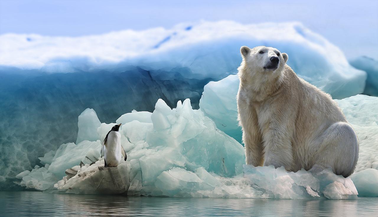 Február 27-e a Jegesmedvék Nemzetközi Világnapja